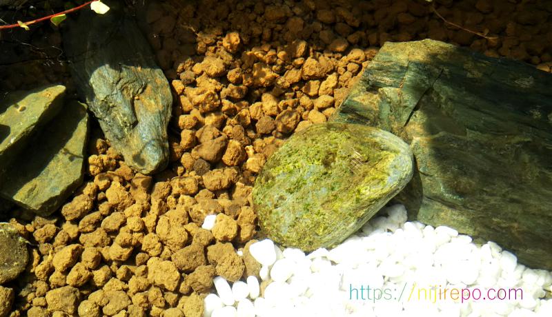 付着していた藻をミナミヌマエビとメダカに食べられた後の石